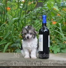Achilles 8 weeks wine1