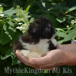 puppyfind Mi Ki dog breed