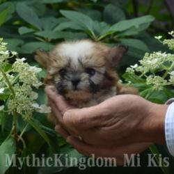 mi-ki breeders USA