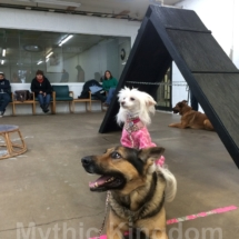 V with dog friend Jan 2014