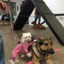 V with dog friend1 Jan 2014